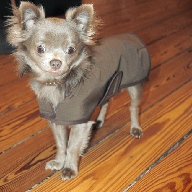 Hundemantel Softshell