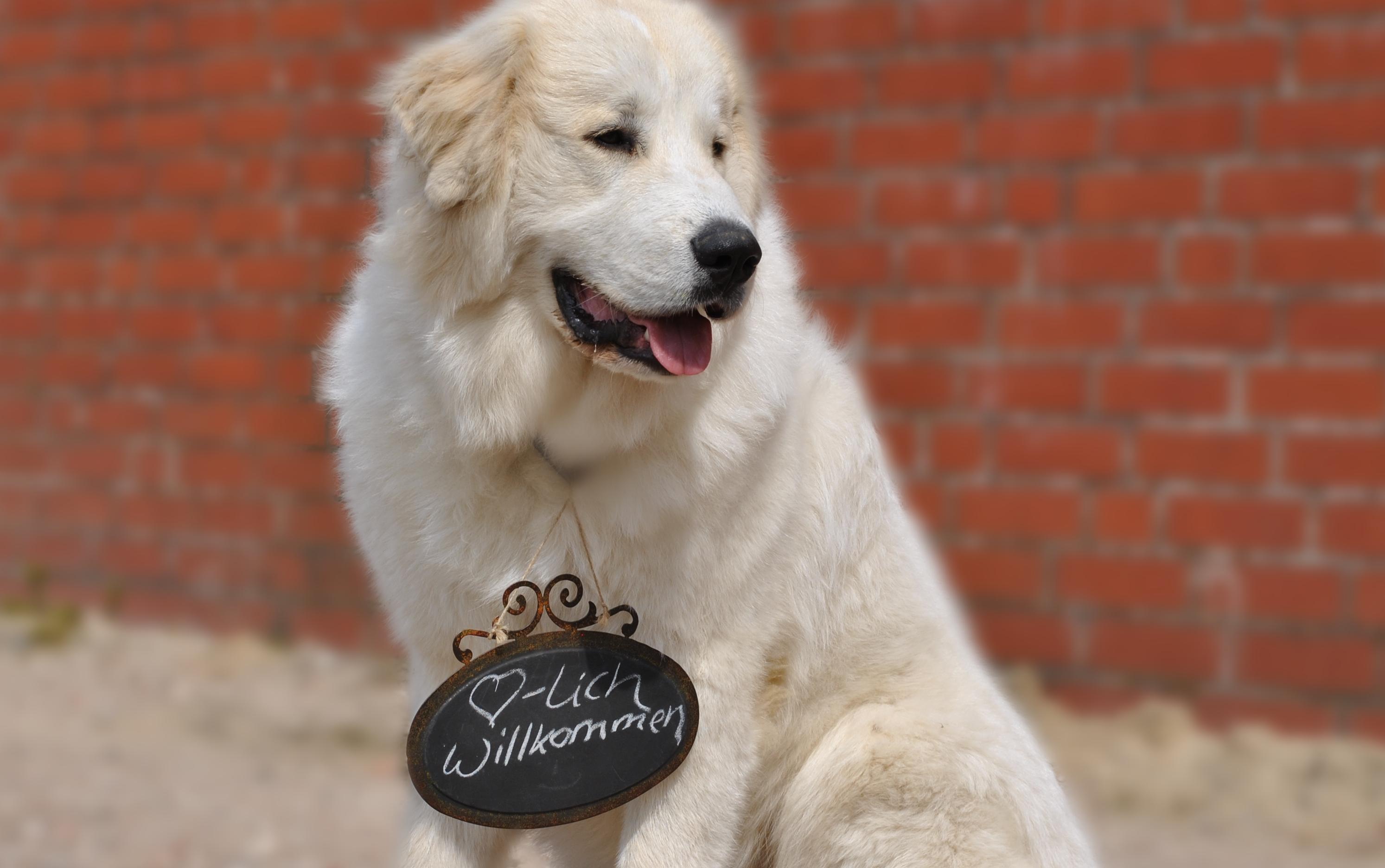 Manufaktur für Hundezubehör