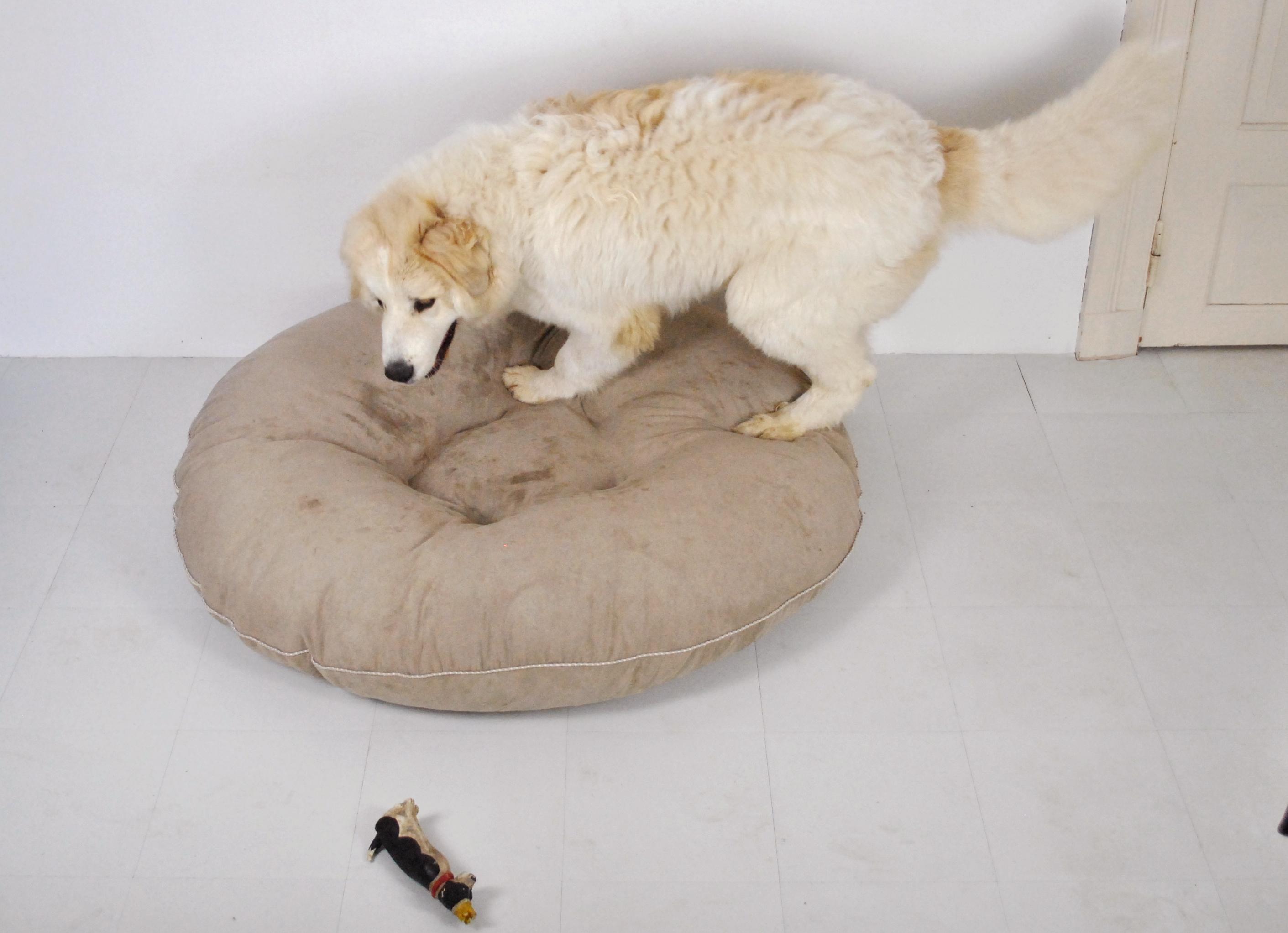 Hundebett großer Hund