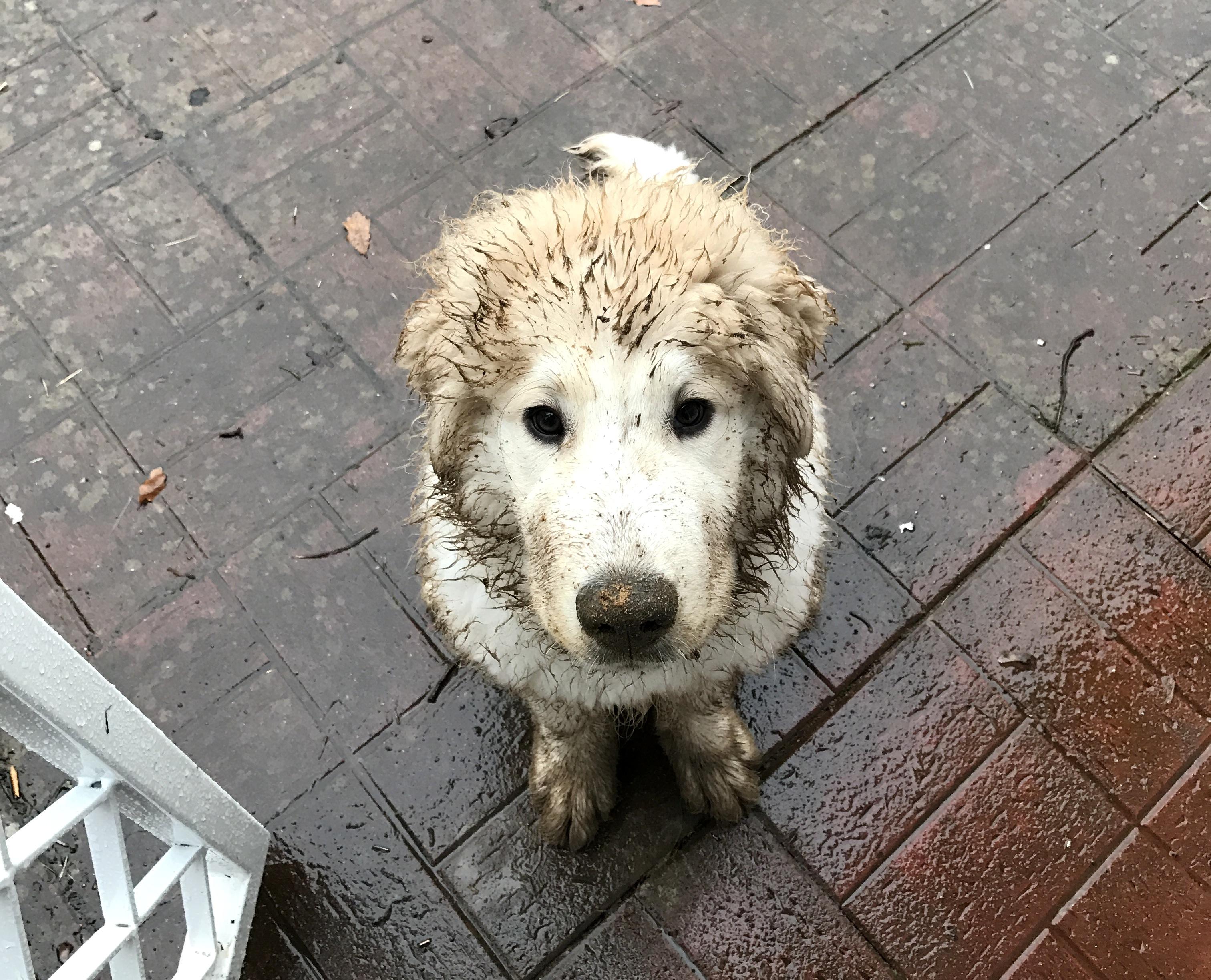 Hund nach dem Toben im Dreck