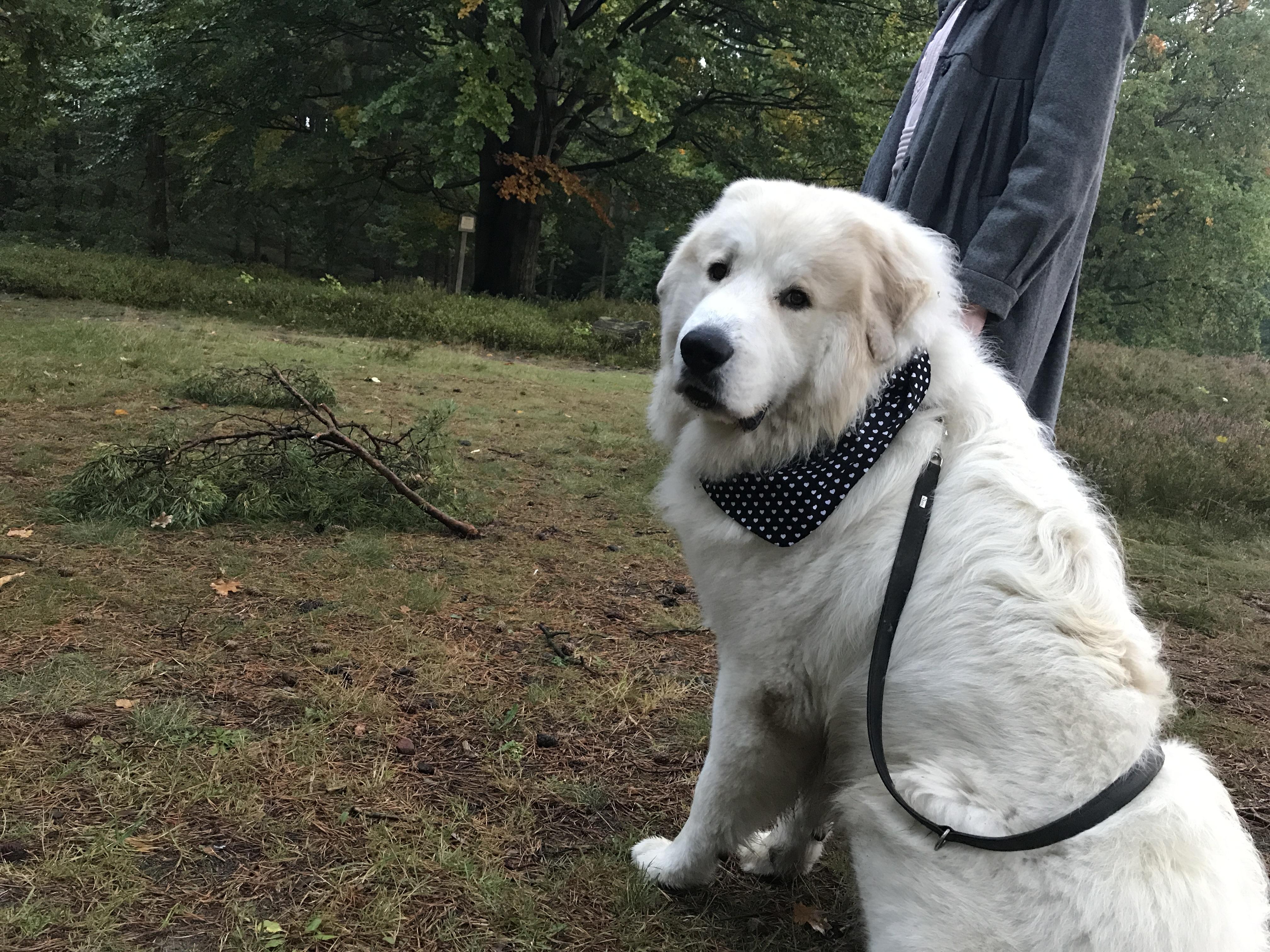 Hundehalstuch in XL