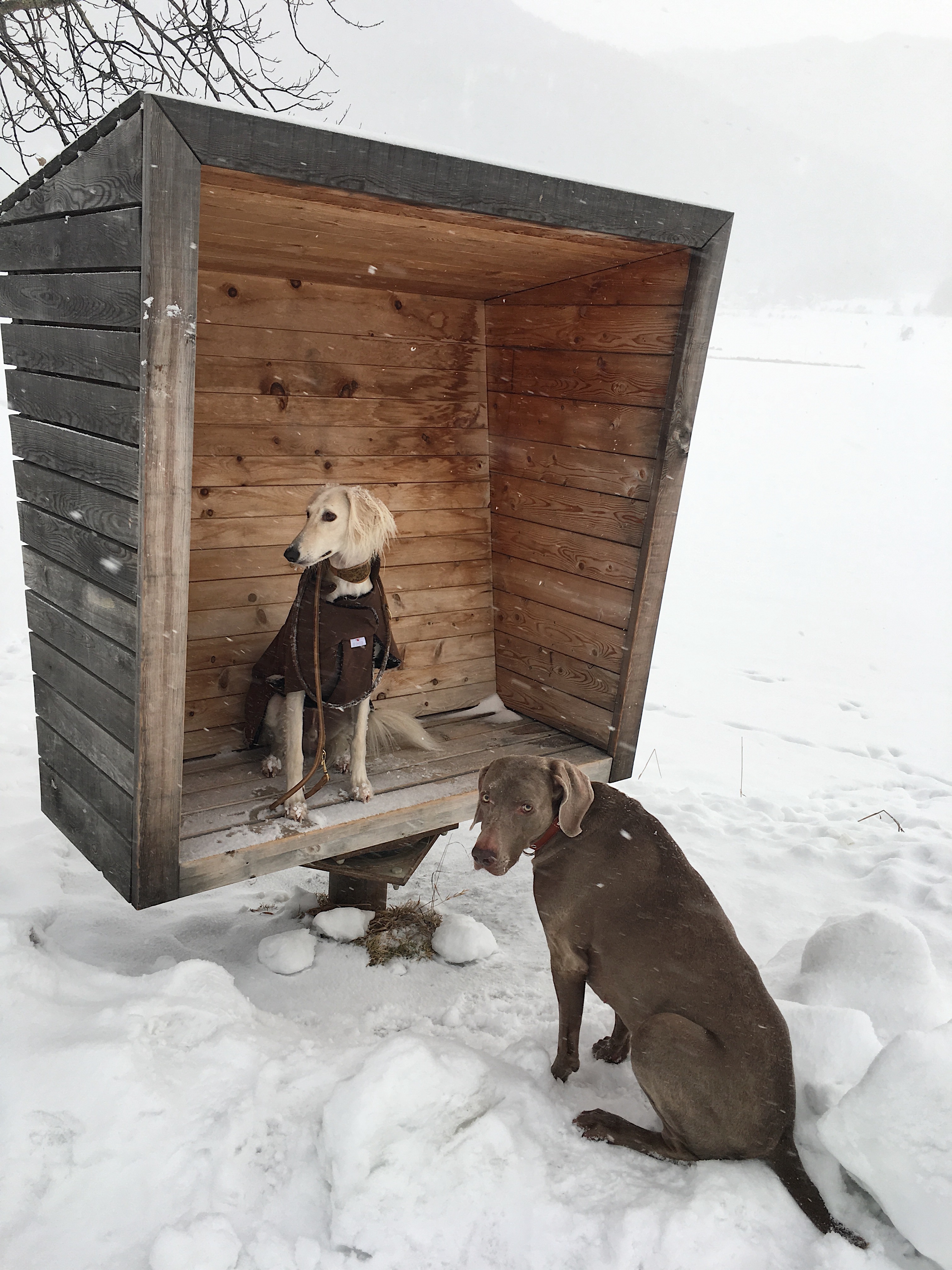 Hundemantel handmade