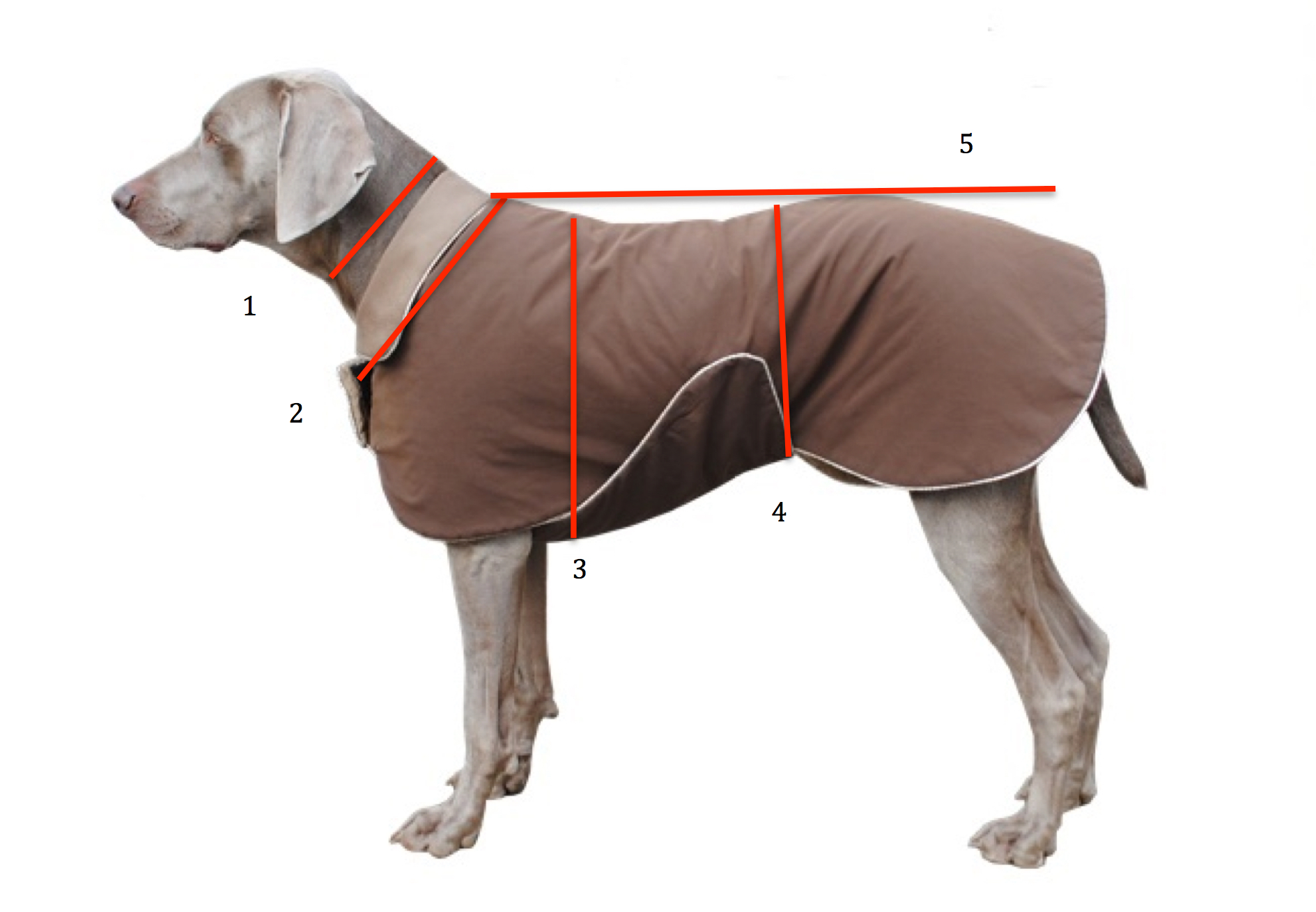 Wir fertigen unsere Hundemäntel nach Maß in Handarbeit