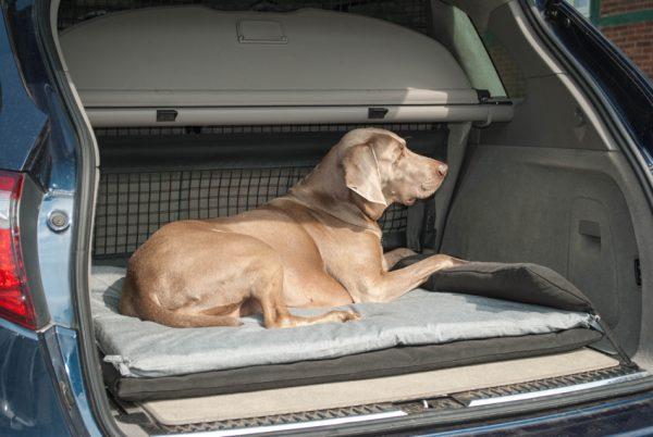 Hundebett Auto