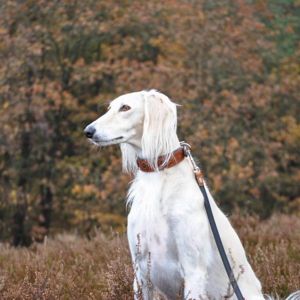 Hundehalsband Windhund