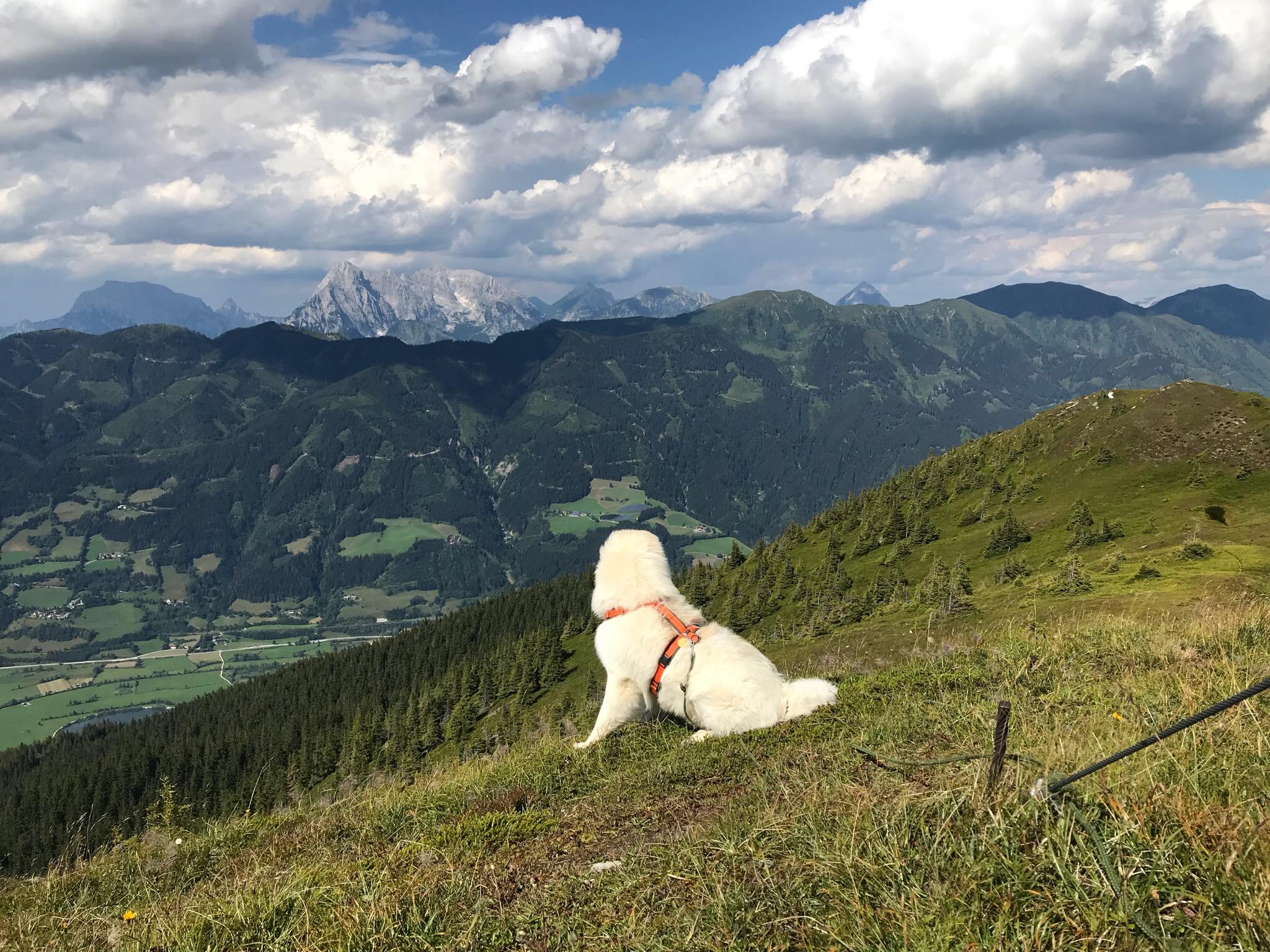Mit Hund in den Bergen