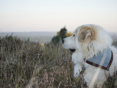 Hundehalstuch
