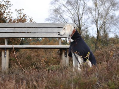 Hundemantel Windhund