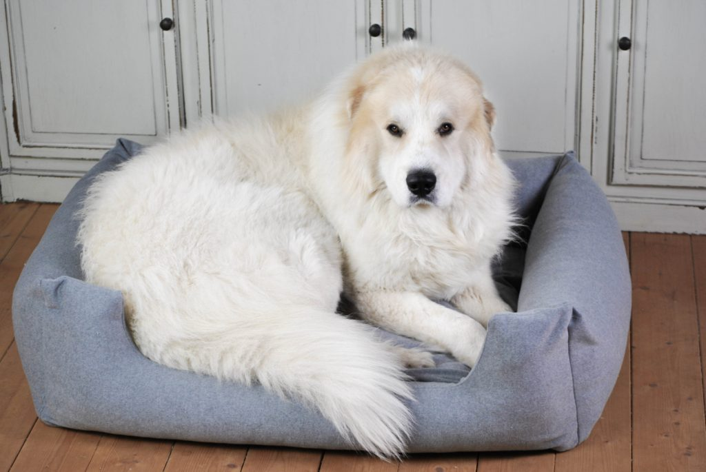 Hundebett Loden grau XL